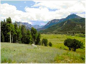 Forest management means beautiful vistas